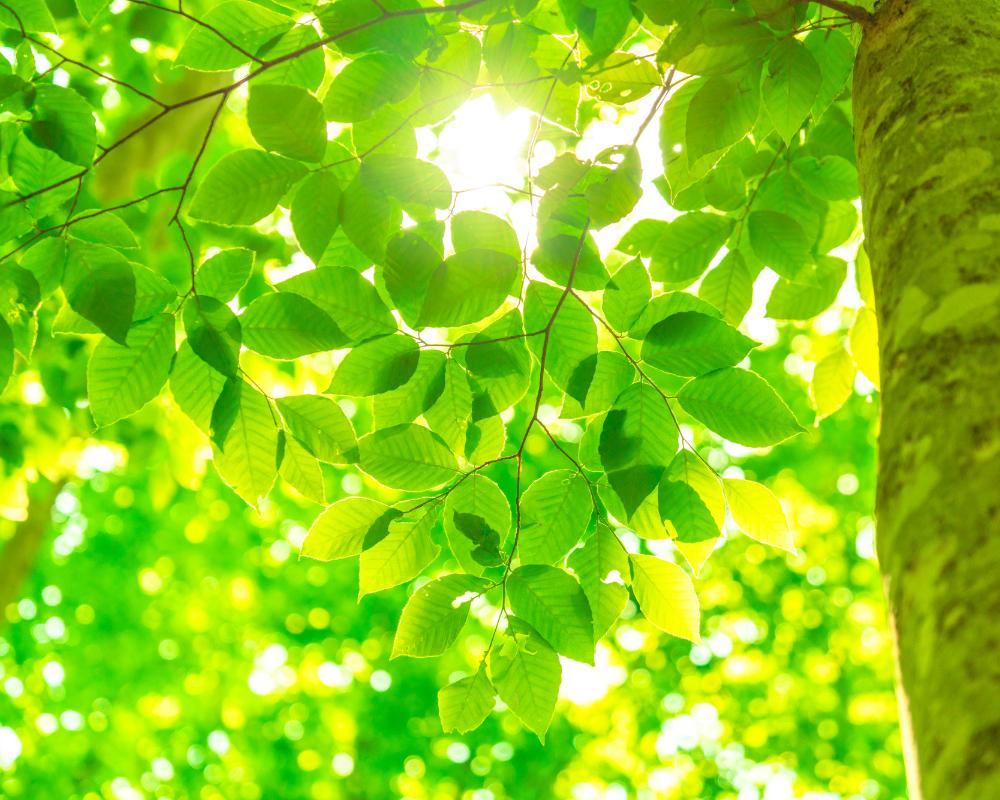 人・環境と調和するものづくりを